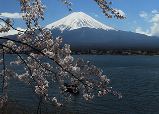 Spring Only! Mt.Fuji & Flower course